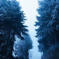 parc de courzieu monts du lyonnais l'hiver