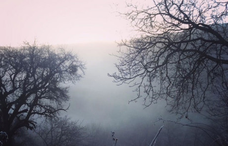 image forêt parc de courzieu hiver