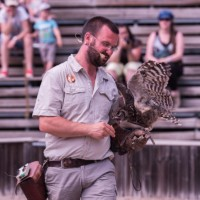 Fauconnier et hibou au parc de courzieu